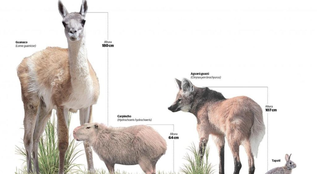 Córdoba es la primera provincia en proteger a sus mamíferos