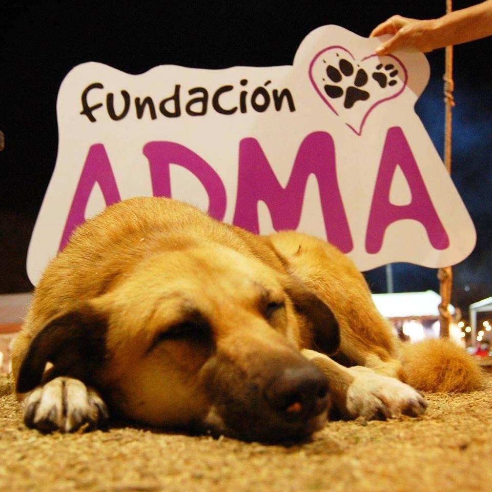 La Fundación ADMA retomó su servicio de castraciones. Hay que pedir turnos por vía telefónica.
