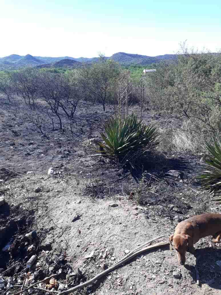 Ocurrió en La Quintana, un empleado acato las ordenes de su jefe. Debía quemar basura en la parte trasera de su casa y se produjo un incendio hasta el alambrado perímetral de un vecino.