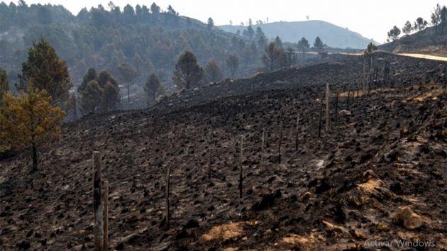 Las cenizas de los incendios comienzan a llegar a los causes de los ríos