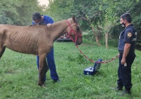 Rescatan a una yegua maltratada en Alta Gracia