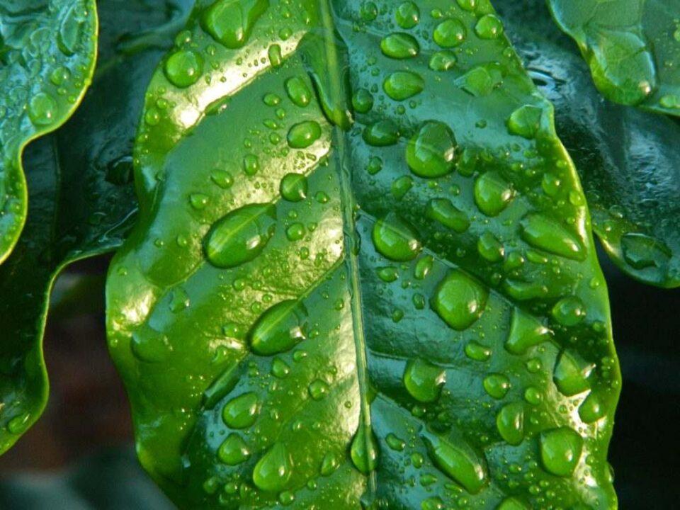 Pasión por las plantas: ¿Cómo afecta la lluvia a nuestras plantas?