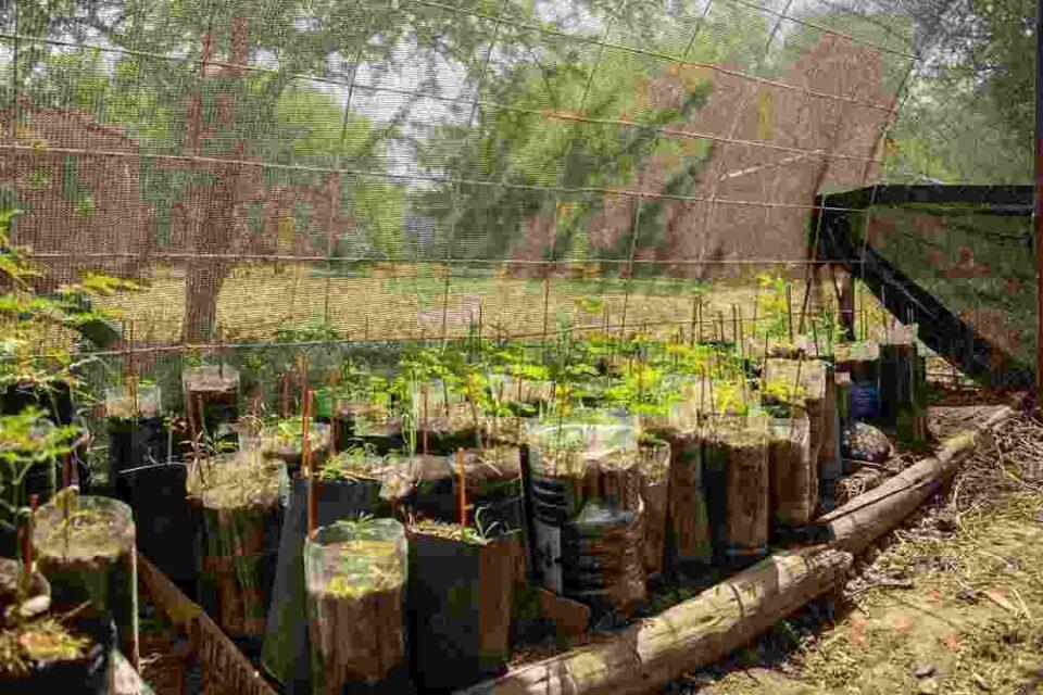 La municipalidad de Anisacate junto a la escuela ambiental, llevan adelante un proyecto de germinación de árboles nativos y la coordinación de capacitación.