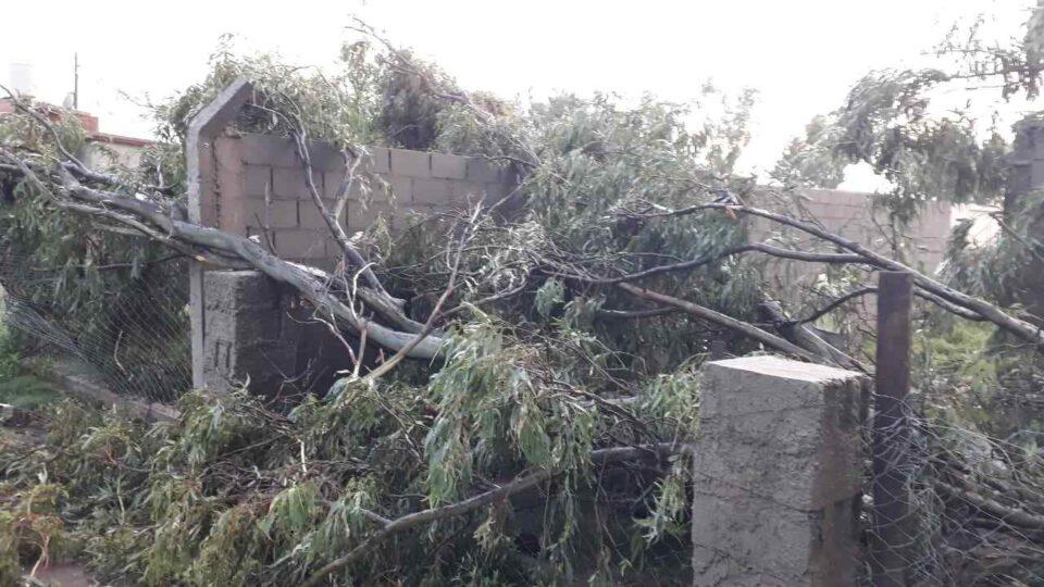 La tormenta dejó árboles caídos, inundaciones y techos volados
