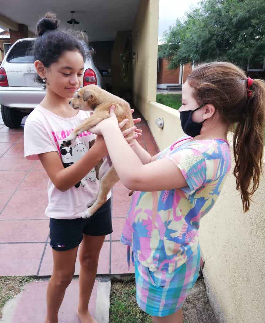 Una buena: adoptaron a los cachorritos abandonados en la puerta de ADMA