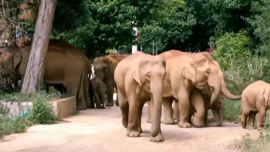 La marcha de los elefantitos