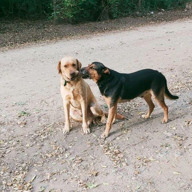 Jorge Merlo realizó la denuncia formal por la aparición de perros envenenados