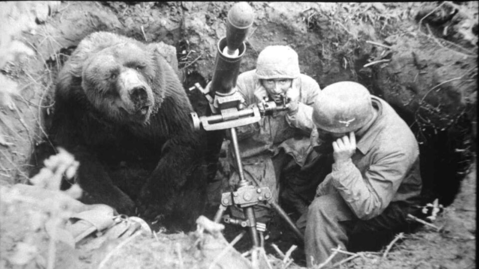 El oso que luchó en la Segunda Guerra