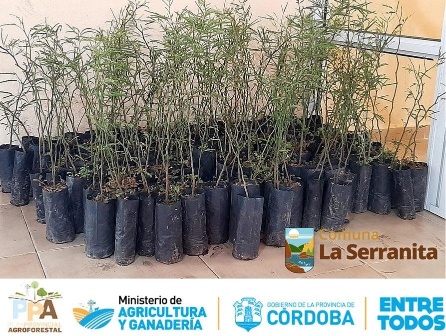 La Serranita: Primer paso para el plan de reforestación nativa