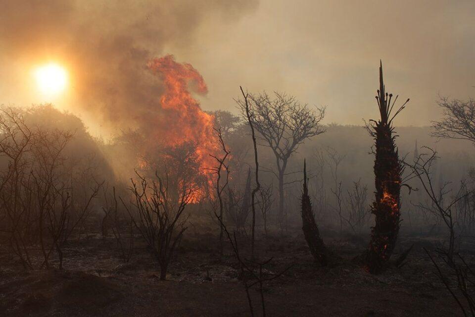 Guardaarroyos y Guardaplazas reciben donaciones para ayudar a los afectados por los incendios en el norte cordobés